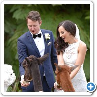 Shannon and his bride Nicole with some Alpacas