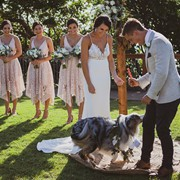 Phil receives the wedding ring from their ring bearing dog Kali during their marriage ceremony