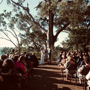 Beautiful bluegum forest setting for Dan and Amy's wedding at Binna Burra
